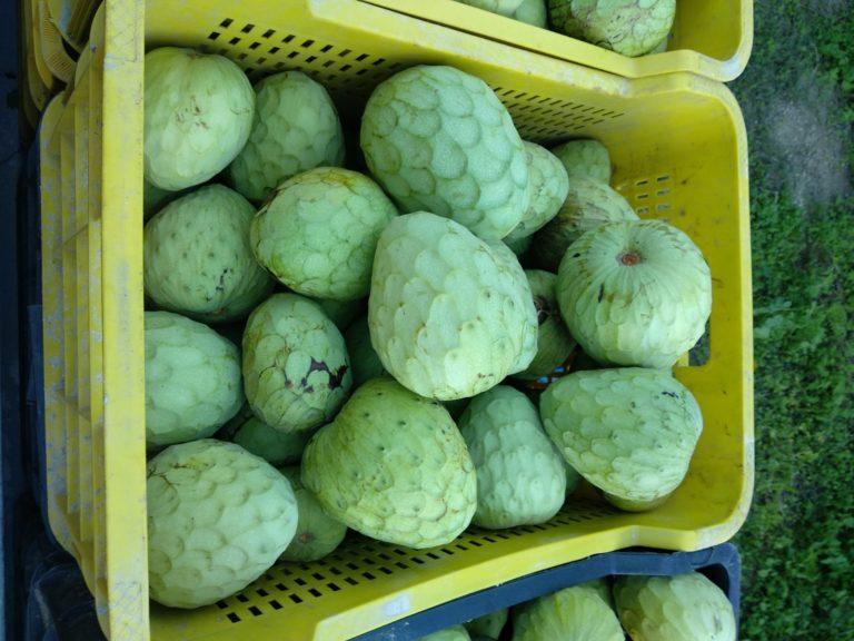 caisse de cherimoyas chez Benja
