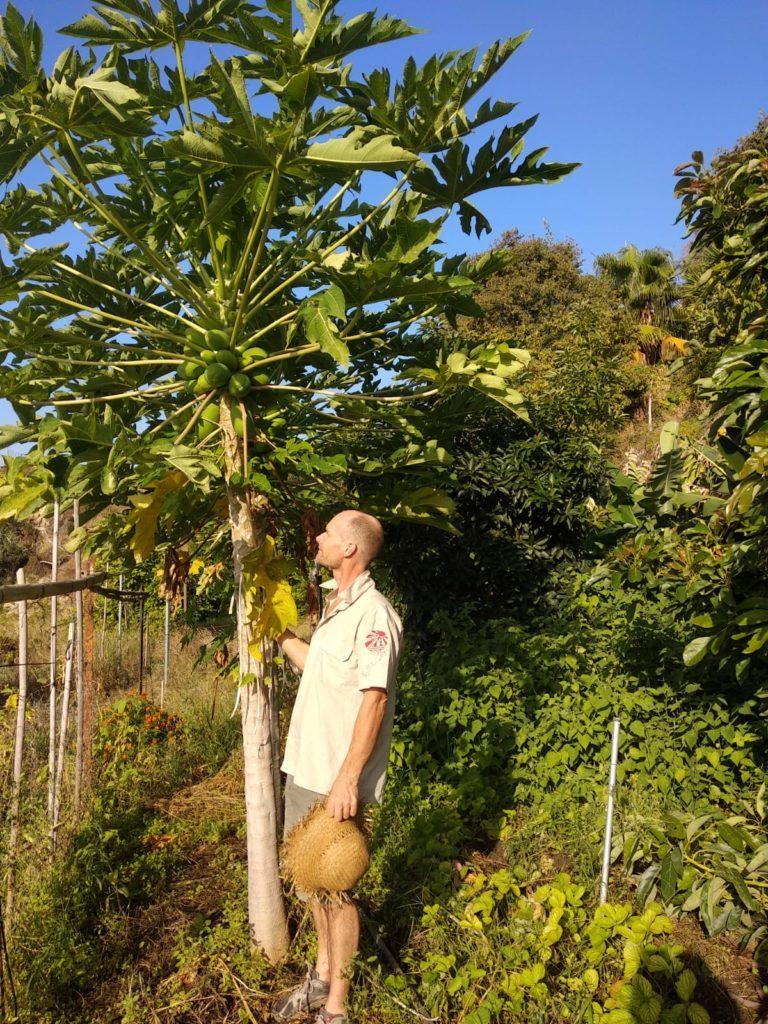 Benja avec papayer