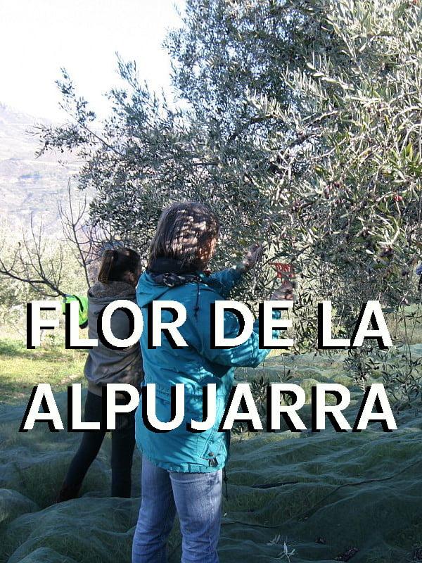 Producteur Andaloubio Flor de la Alpujarrra