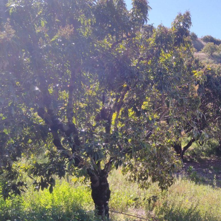 Visite de la ferme de Jose Antonio