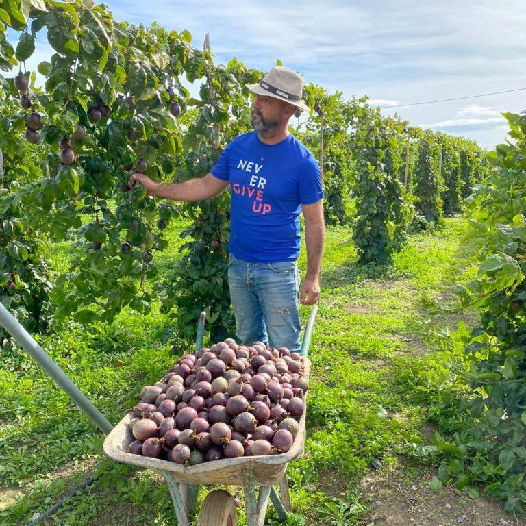 Sergio qui récolte des fruits de la passion (producteur Andaloubio)